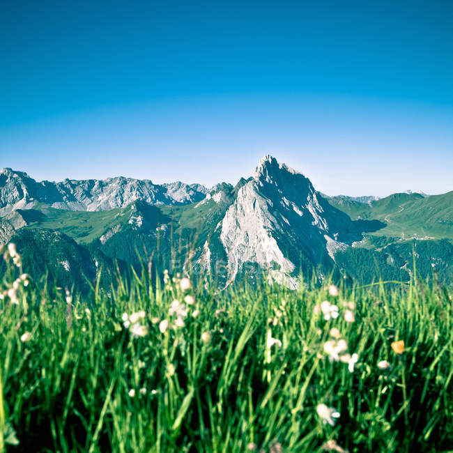 Alpine landscape with flowers — Stock Photo