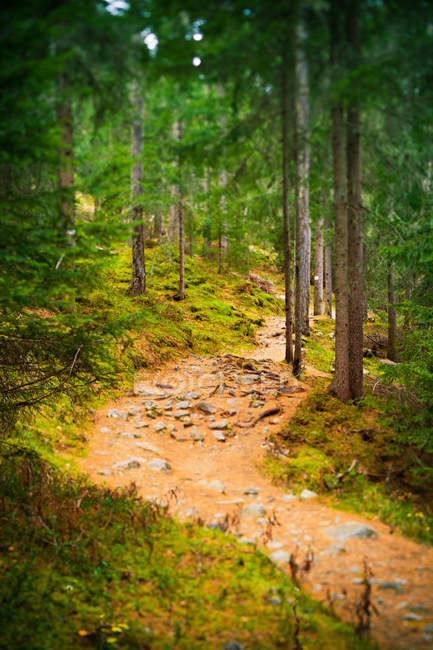 Извилистая дорога в горном лесу — стоковое фото