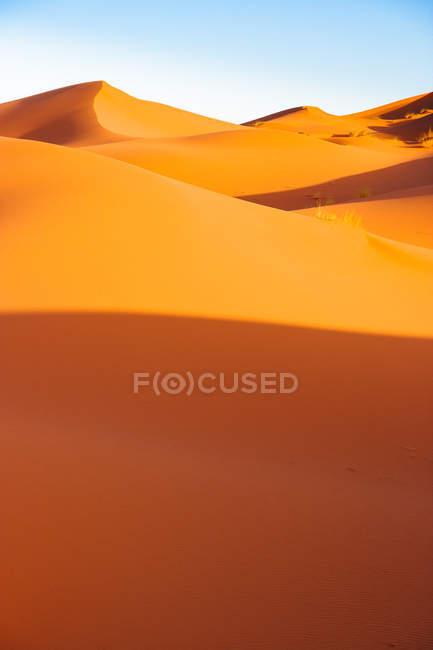 Sand dunes in Sahara desert — Stock Photo