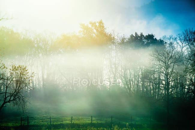Brumosa pradera en campo - foto de stock