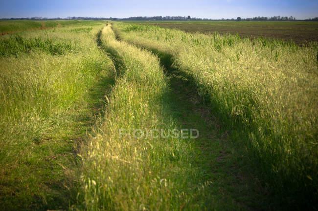 Strada sul pascolo nella campagna — Foto stock