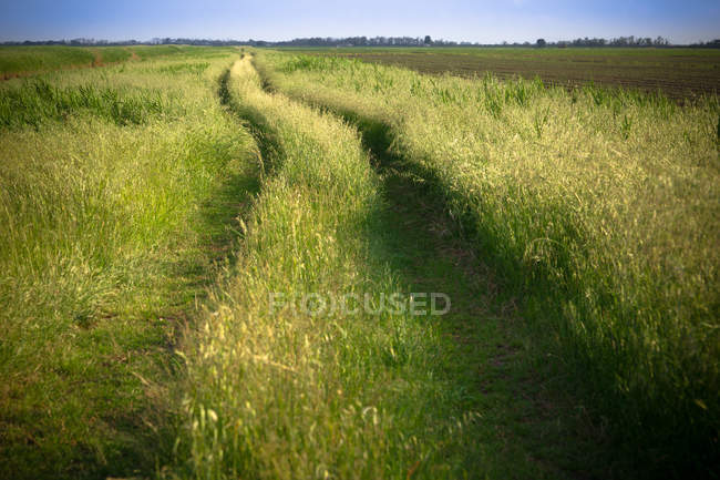 Road on pasture in countryside — Stock Photo