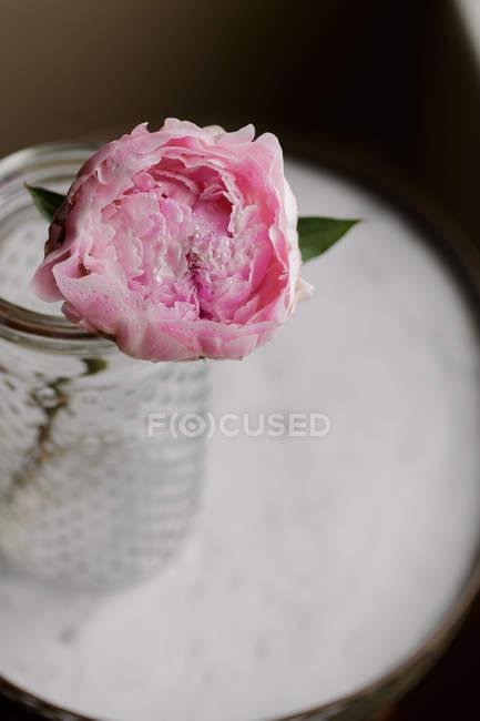 Закри свіжі cut рожевий півонія квітка у jar — стокове фото