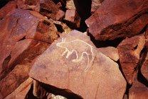 Рука кенгуру, опираясь на Красной скале — стоковое фото