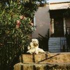 Blanc couché à escaliers baignées de soleil devant la maison et à la recherche de côté — Photo de stock