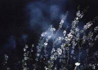 Rami con fiori selvatici su sfondo notturno — Foto stock