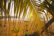 Вид через пальмовых листьев солнцем океана пляж — стоковое фото