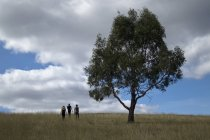 Vista trasera de tres personas caminando al lado del árbol en el campo de la campiña - foto de stock