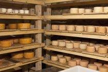 Vista de rodas de queijo de cabra em prateleiras de madeira — Fotografia de Stock