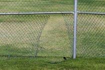 Дыра в цепи забор на травянистом поле — стоковое фото