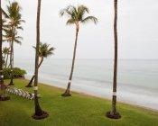Palmeiras e espreguiçadeiras na praia em Maui, Havaí — Fotografia de Stock