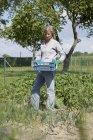 Літня жінка з ящик зібраний урожай картоплі в город — стокове фото