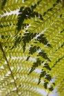 Vollbild-Aufnahme der Blätter — Stockfoto