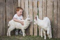 Мальчик играет с козлёнками в парке — стоковое фото