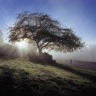 Пейзаж дерева в лучах восхода солнца на обочине сельской дороги — стоковое фото