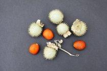 Kinkan e datura plantar frutas em fundo cinza — Fotografia de Stock