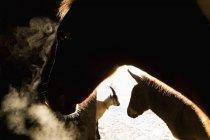 Tiere morgens im Stall auf Bauernhof — Stockfoto