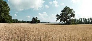 Vue tranquille sur de vastes champs de foin le jour ensoleillé — Photo de stock