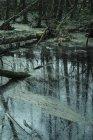 Vista de ángulo bajo de troncos de árbol caído en el río cubiertas de musgo - foto de stock