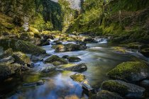 Wald-Fluss fließt durch bemoosten Felsen — Stockfoto