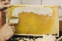 Обрезанное руки женщины, почесывая соты в промышленности — стоковое фото