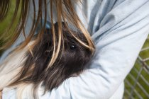 Cropped image of girl holding guinea pig — Stock Photo