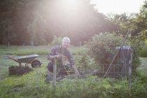 Portrait d'un homme mature souriante, travaillant dans le jardin communautaire — Photo de stock