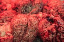 Tiro de marco completo de cerebros de carne - foto de stock