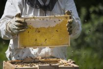 Midsection of beekeeper holding honeycomb at farm — Stock Photo