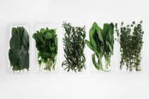 Directly above view of fresh herbs in bowls on white background — Stock Photo