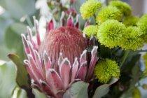 Nahsicht auf frische Blütenköpfe — Stockfoto