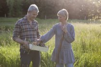 Mature couple examining harvested vegetables in crate at community garden — Stock Photo
