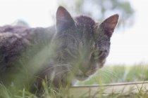 Можна домислити портрет кішка, дивлячись на камеру — стокове фото