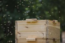Bees flying around beehive at farm — Stock Photo