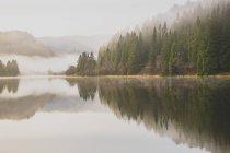 Vue panoramique de sapins reflétant dans l'eau calme sur jour de brouillard — Photo de stock
