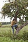 Человек забирается на яблоню с спелыми яблоками в саду — стоковое фото