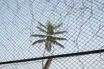 Low angle view of palm tree seen through chainlink fence — Stock Photo