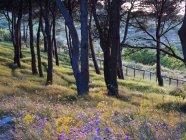 Blumen wachsen auf grasbewachsenen Hügel von Bäumen — Stockfoto