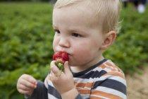 Bambino ragazzo mangiare fragola all'aperto e guardando altrove — Foto stock