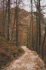 Idilliaco sentiero passando attraverso alberi di foresta di autunno — Foto stock