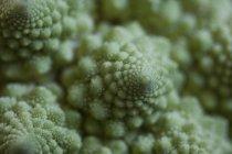Close-up vista de couve-flor Romanesco — Fotografia de Stock