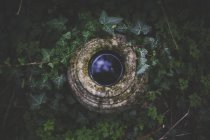 High angle view of water in stone container surrounded by plants - foto de stock