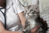 Meio de gato de exploração veterinário na clínica — Fotografia de Stock
