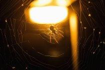 Крупним планом подання павук Інтернеті освітленій тлі — стокове фото