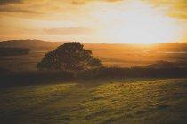 Vue panoramique du paysage vert contre le ciel pendant le coucher du soleil — Photo de stock