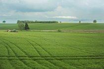 Ruhige Szene der Agrarlandschaft mit Traktor im Bereich — Stockfoto
