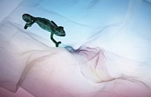 High angle view of lizard on fabric — Foto stock