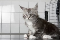 Cat sitting on table at vet clinic — Stock Photo