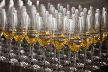 Стаканы белого вина на столе — стоковое фото
