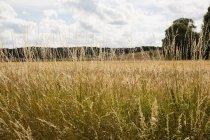 Pflanzen, die an Sommertagen auf dem Feld wachsen — Stockfoto
